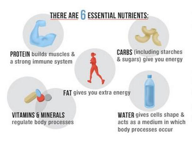 6 Essential Nutrients - PLanning 10
